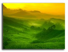 Малайзия. Sunrise view of tea plantation landscape at Cameron Highland, Malaysia. Фото  szefei - shutterstock