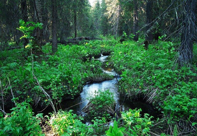 Фото связанные в лесу 10 фотография
