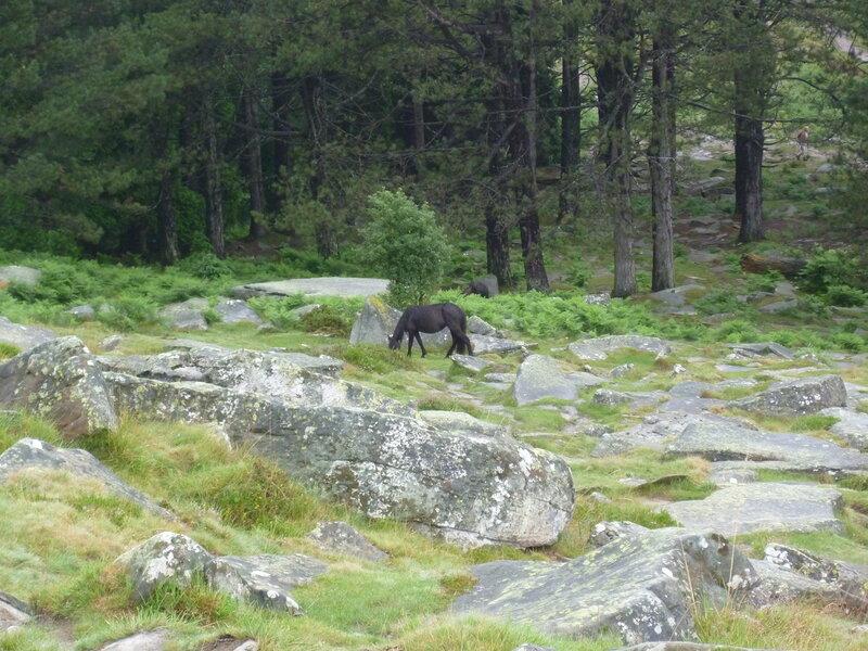 Вольные баскские пони гуляют по склонам горы...