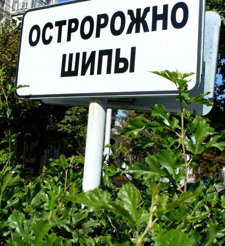 остро предупреждение )