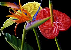 JVDE_Flowers.png