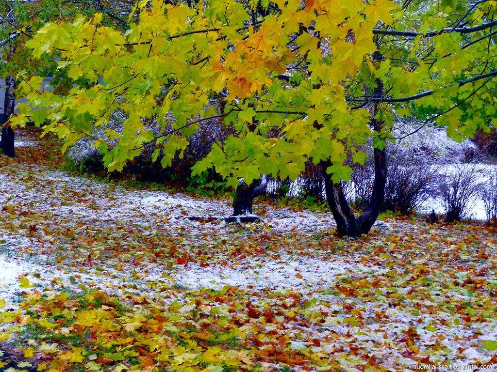 19.10.09 - Первый снег.