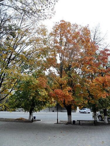 Осенние картинки, октябрь 2012