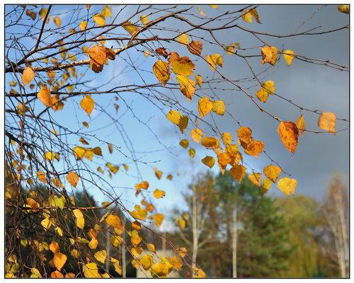 Небрежно листья разбросав, Кружит, играет ветер; И осень рыжая стремглав Спешит, летит на встречу. деревья. пейзаж...