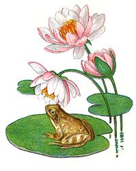 Флора и фауна водоемов