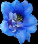 ldavi-shadowedflowers-delphinium27.png