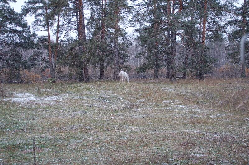 Зося и первый снег