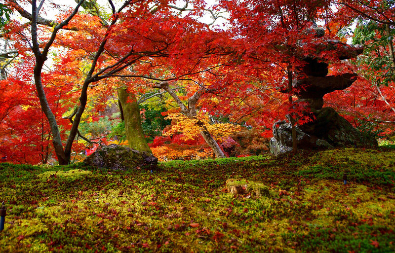Япония Осенью (г. Киото)