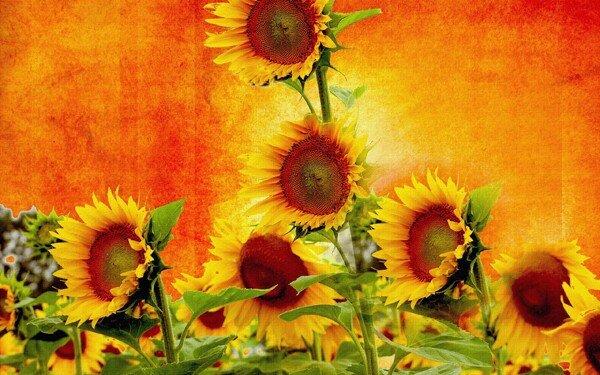 предпросмотр. таблица цветов. burova.  Автор схемы.  0. оригинал.  Размеры: 190 x 126 крестов Картинки.