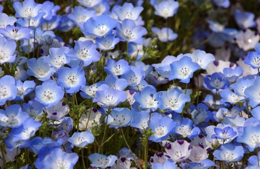 Живописный японский парк Хитати Кайхин 0 1422f0 26cee1ff orig