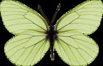 jss_bluejeans_butterfly green 4.png