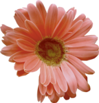 moosscrapsdesigns_floralpleasure (39).png
