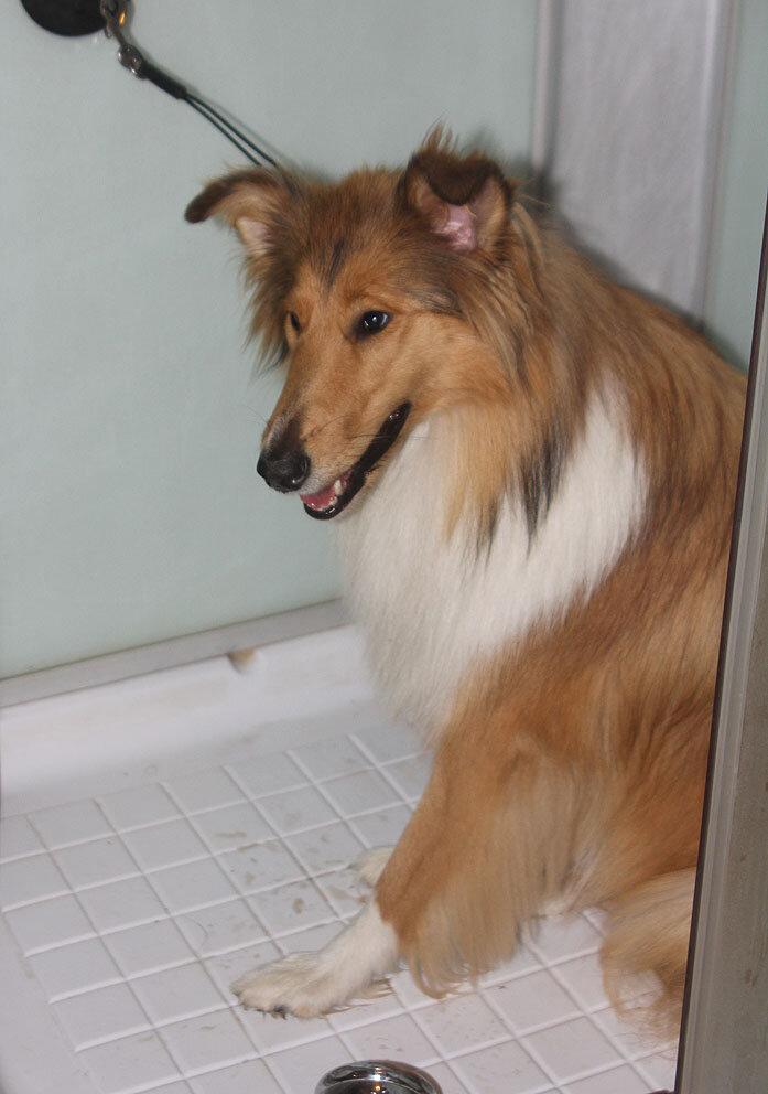 Недельные курсы повышения квалификации для собакообожак :-) Приглашаем всех!!! - Страница 2 0_7d756_189d64f4_XXL
