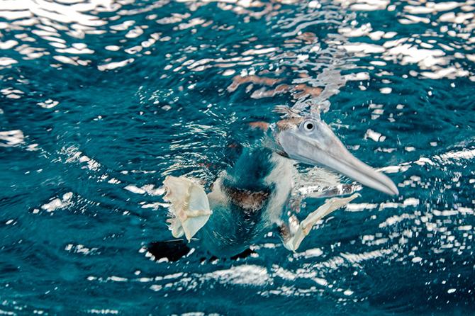 Pogruzheniya-vo-vsex-ugolkax-planety8230-Podvodnye-foto-Dmitriya-Miroshnikova-28-foto