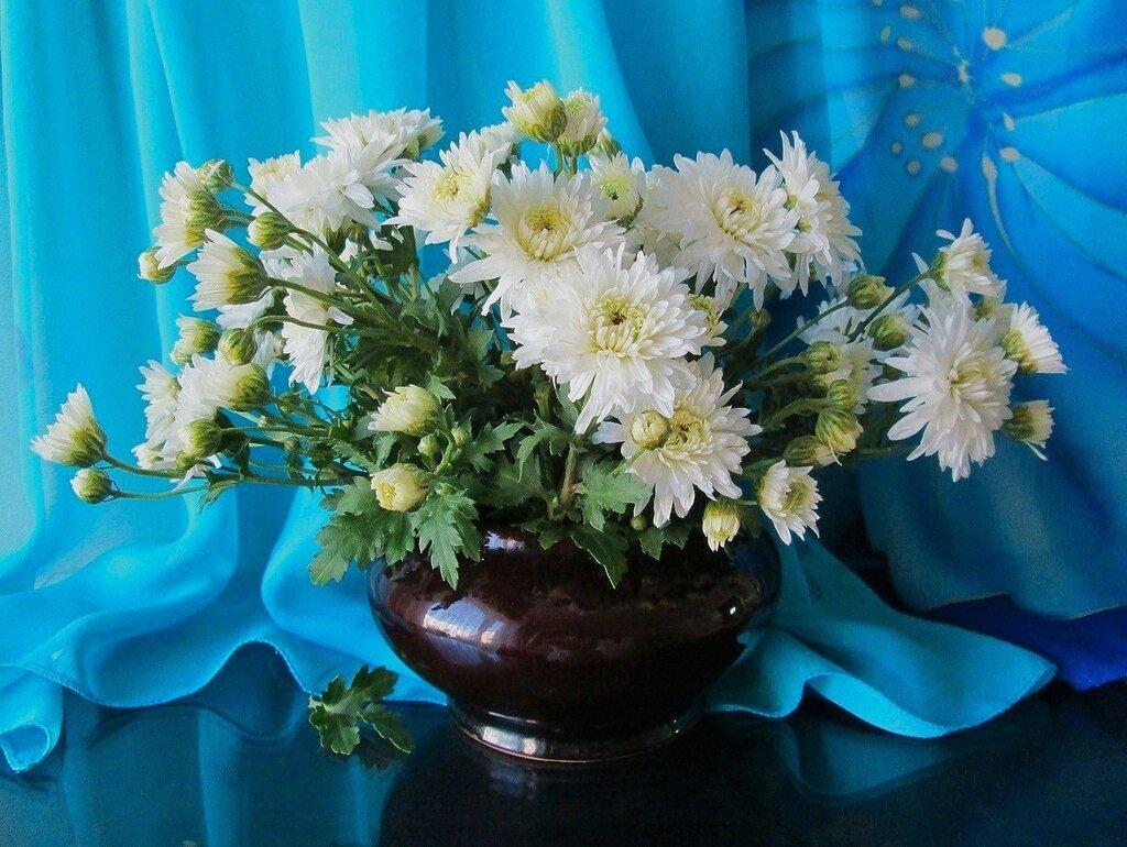 считает себя картинки хризантемы в вазе имена можно