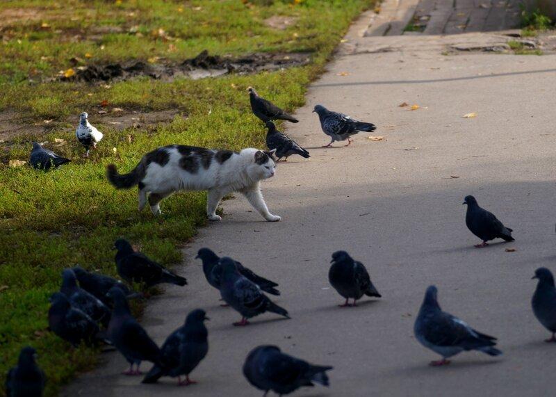 дорогу,пучки перьев!