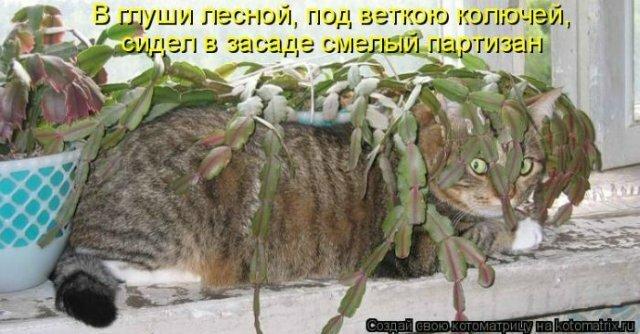 http://img-fotki.yandex.ru/get/6519/59709858.1d/0_ef6da_5e6cc44e_XL.jpg