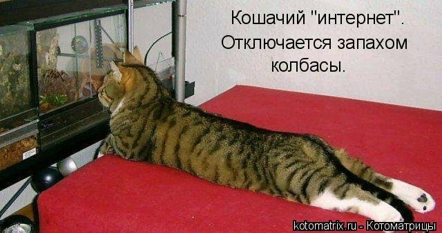 http://img-fotki.yandex.ru/get/6519/59709858.1d/0_ef6e0_53df2f11_XL.jpg
