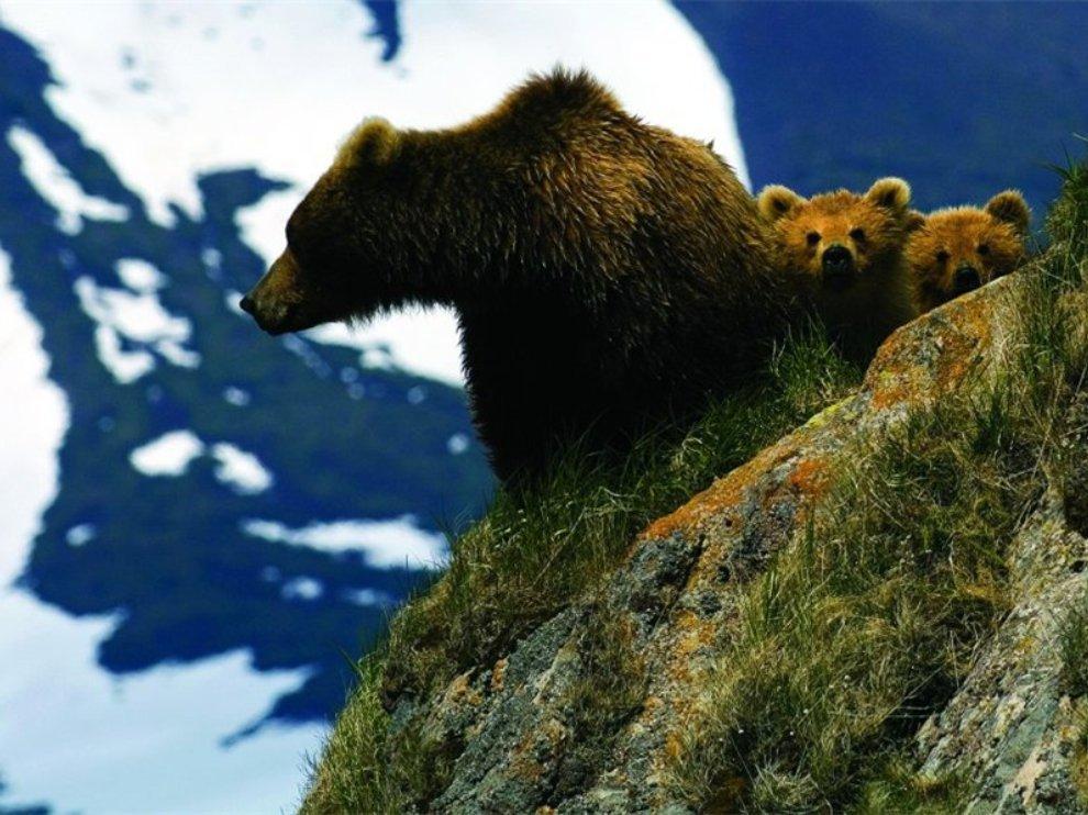 Лучшие фотографии National Geographic Russia в октябре