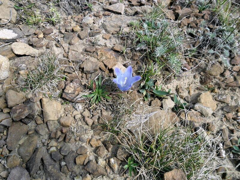 Цветок у горной тропы, Большой Тхач, сентябрь