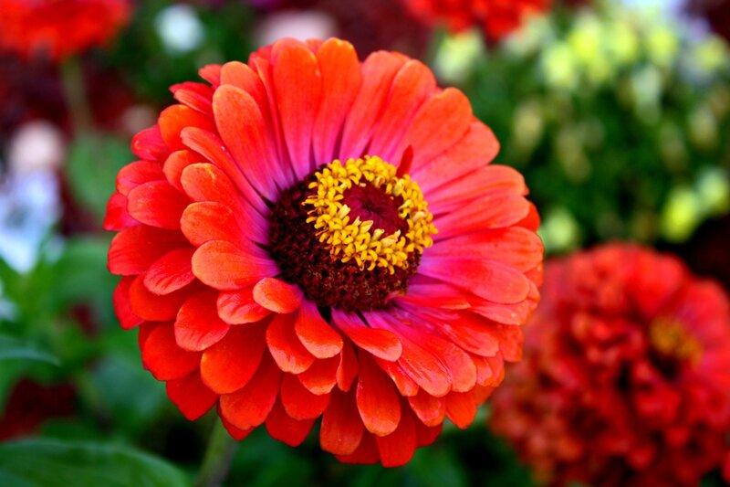 Одиночные цветы картинки 5