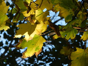 Осенний фотоконкурс 0_a7128_d7c15c8b_M