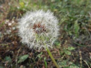 Осенний фотоконкурс 0_a712b_6798d6a4_M