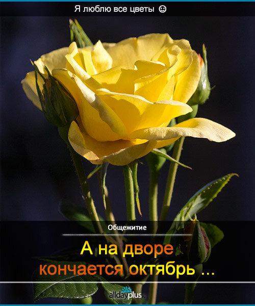 Я люблю все цветы, часть 26