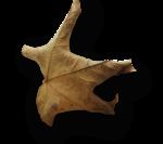 natali_halloween_leaf9-sh.png