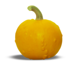 natali_halloween_pumpkin7-sh2.png