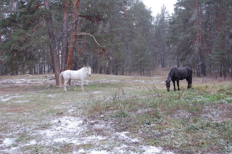 """кордон """"Бедная гора"""", лошади и Первый снег"""