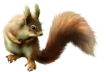 ldavi-scenesfms-squirrel1a.png