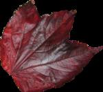 Autumn by Anna- Jolanta(129).png