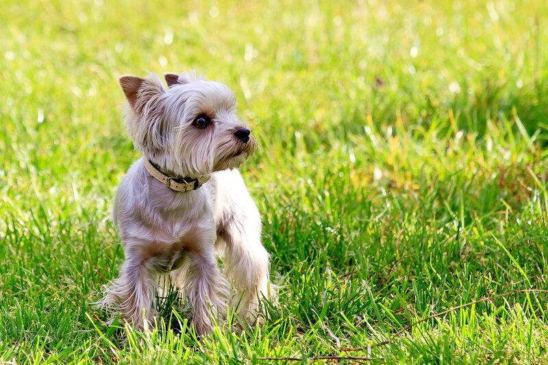 Собачий портрет - Страница 19 0_a060f_214432e9_XL