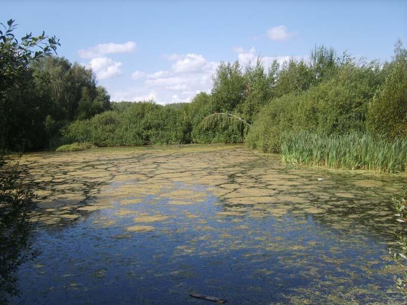пруд у СНТ Лапино