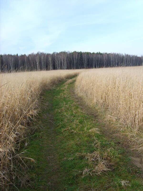 поле, осень