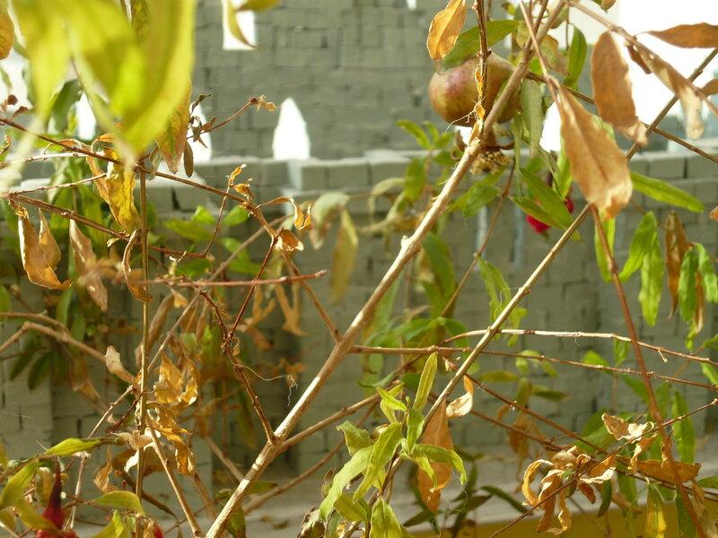 Осенний фотоконкурс 0_8769d_9ca8a819_XL