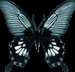 jss_bluejeans_butterfly blue 4.png
