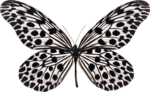 jss_bluejeans_butterfly white 1.png