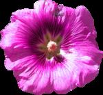 RD_SummerBreeze_flower1.png