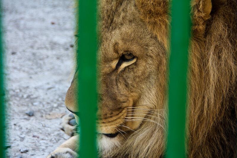 Чечня. Грозный. Зооуголок в парке на Ташкале.