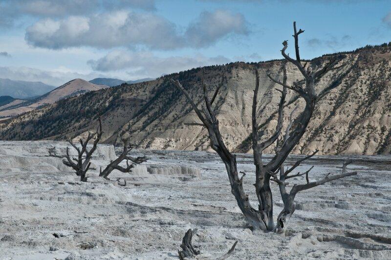 Террасса с мертвами деревьями