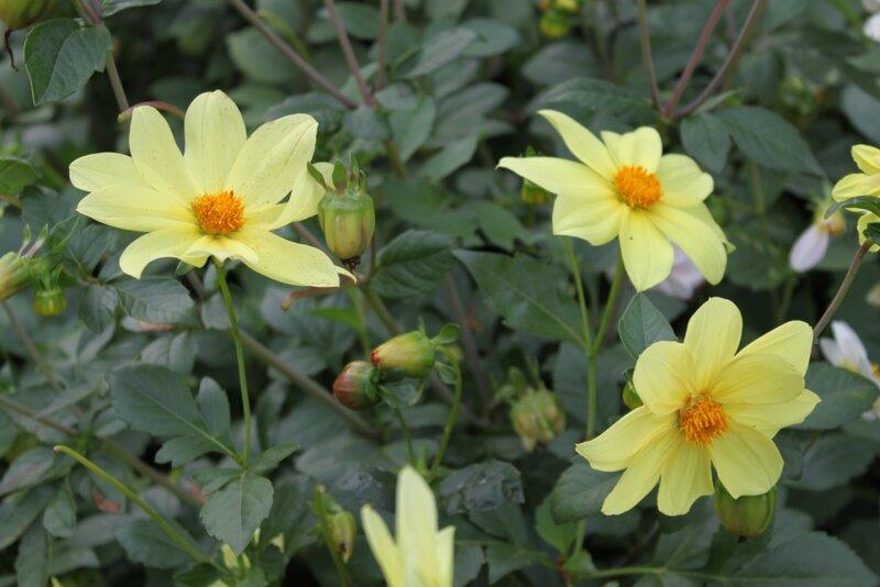 Цветы в октябре