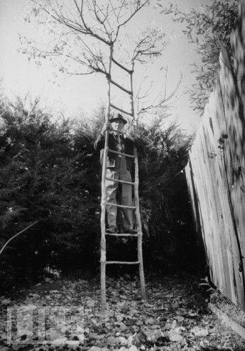أشجار اكسل العجيبة 0_947a6_3f48b199_ori