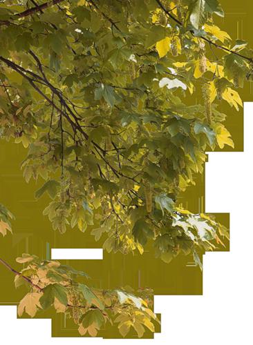 осеннее дерево клипарт: