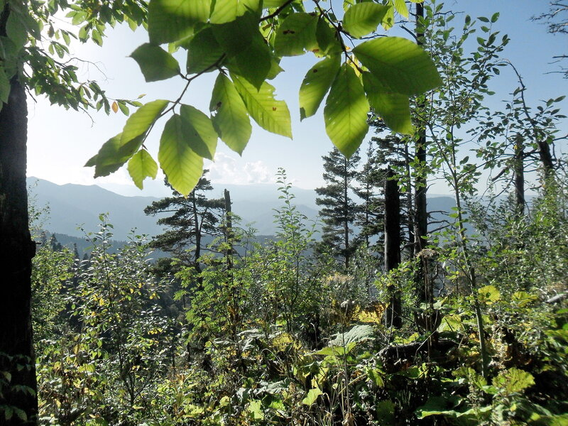 В лесу, тропа к Тхачу, сентябрь 2012