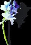 ldavi-shadowedflowers-delphinium2.png