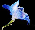 ldavi-shadowedflowers-delphiniumorhat30.png