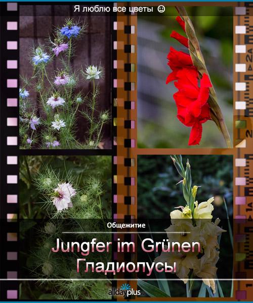 Я люблю все цветы, часть 24