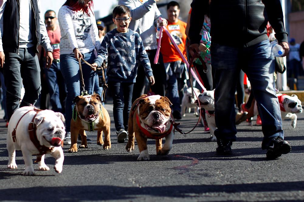 900 Bulldogs in Mexico City